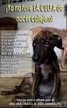 ¡No al maltrato animal! Baby Dogs, Pet Dogs, Dog Cat, Save Animals, Animals And Pets, Save A Dog, Stop Animal Cruelty, Mundo Animal, I Love Dogs