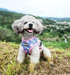 Singapore | Dog Harness | Personalized Dog Bandana | Custom Bowtie Cat Bow Tie, Bandana Bib, Pet Tags, Dog Harness, Dog Accessories, Dog Cat, Pets, Animals, Animals And Pets