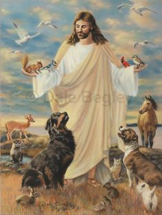 Ideas For Dogs Love Loss Rainbow Bridge Animals And Pets, Cute Animals, Happy Animals, Animals Beautiful, Pet Loss Grief, Image Jesus, Jesus Pictures, Heaven Pictures, Beautiful Pictures