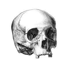 Filipe Franco : Crânio humano. Tinta-da-china s/ scratchboard