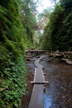 fern canyon loop, prairie creek redwoods state park • near orick, humboldt county