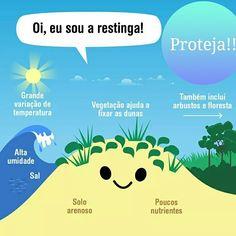 A beleza e a complexidade das formações de vegetação sobre restingas do litoral brasileiro! O gradiente ecológico caracterizado pela zonação no sentido costa-interior define a distribuição das espécies indicadoras de dunas, escrubes e de formações arbóreas, de locais alagadiços ou não. Saiba mais e proteja esses ecossistemas costeiros tão importantes para a manutenção da biodiversidade! Compartilhe! #biodiversidade #brasil #restinga #ensino #good #amazing #mataatlantica #bioma #proteja…