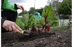 Tips on how to start your first vegetable or herb garden. #garden #gardening