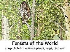 Forests of the World Index -- Exploring Nature Educational Resource