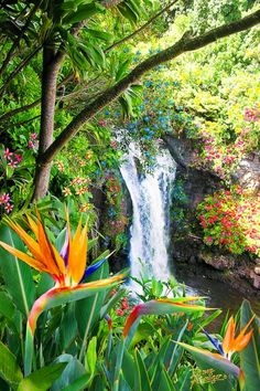 Falls by Doug Kreuger Paradise Falls, Hawaii - Doug Kreuger This picture, tells us that this is a great picture to define.Paradise Falls, Hawaii - Doug Kreuger This picture, tells us that this is a great picture to define. Beautiful Waterfalls, Beautiful Landscapes, Beautiful World, Beautiful Places, Beautiful Nature Scenes, Beautiful Beautiful, Stunning View, Amazing Places, Paradis Tropical