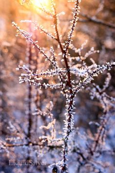 Plant Photograph Nature Photography Winter by CarissasSilverLining, $15.00