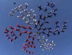 88 female skydiving formation