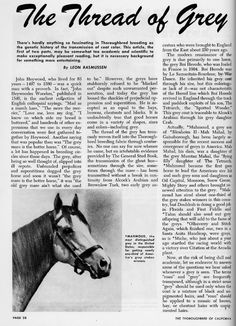 THE THREAD OF GREY ARTICLE 1951 Grey Horses, Horse Facts, Thoroughbred, Horse Racing, Genetics, Fun Facts, History, Reading, Color