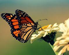 Rare Wonders butterfly pendant inspiration.