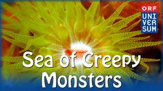 Sea of Creepy Monsters - The Secrets of Nature - YouTube