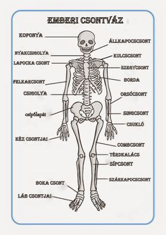 Human Skeleton Labelling Sheets by Twinkl Printable Resources Human Skeleton Labeled, Teen Art, Skeletal System, Nature Journal, Nature Study, Book Activities, Teacher Resources, Human Body, Teaching