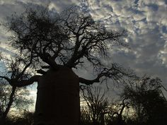 Ah, if trees could talk, This soulful old tree would have some spectacular stories! Description from flickr.com. I searched for this on bing.com/images