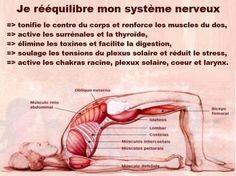- bien-être massage refléxologie plantaire shiatsu zen santé naturelle