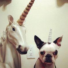 Unicorns do exist!
