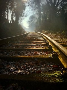 cold iron rails leave old mossy trails through the countryside.