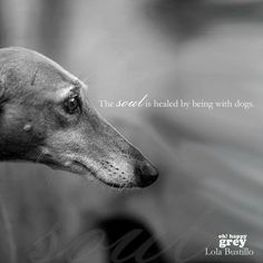 the soul is healed by being with dogs <3