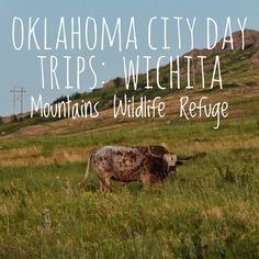Oklahoma City Day Trips: Wichita Mountains Wildlife Refuge