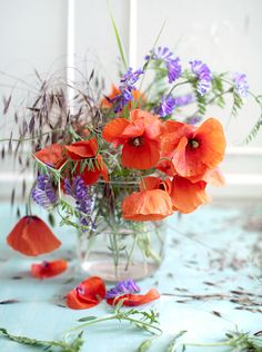Pretty color combo of coral poppies with purple accents