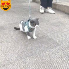 Funny Animal Videos, Funny Animal Pictures, Funny Animals, Cute Animals, Videos Funny, Cat Leash, Cat Harness, Dog Clothes Patterns, Cat Carrier