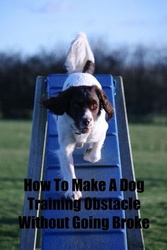 How To Make A Dog Training Obstacle Course Without Going Broke: Want to make a dog training obstacle course like the one you saw on your favorite dog show, but don't have a Hollywood budget? Check out these tips for building one without going broke!