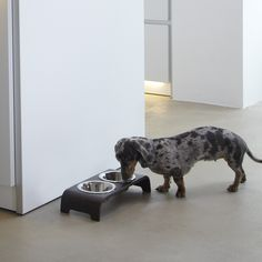 MiaCara dog bowl dogBar oak choco