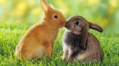 animal best friends | Best-top-desktop-animals-wallpapers-hd-animal-wallpaper-picture-image ...