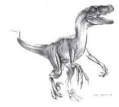 Velociraptor mongoliensis Dinosaur - Saurischian Dinosaurs - Planet Dinosaur