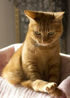I see you sneaking up on me.  You can not surprise a cat. I am just waiting here, claws primed and ready to go.