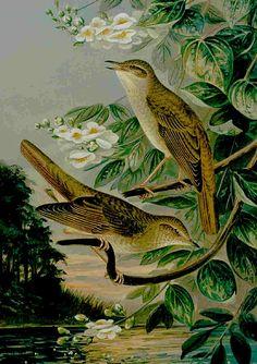 The Nightingale German illustration, 1905