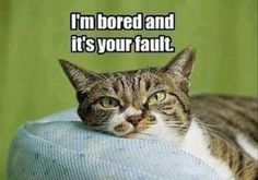 Have you entertained your kitty today?