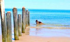 Exploring Moana Poles at local Moana Beach