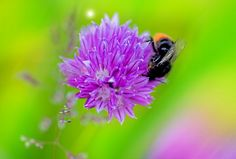 Beauty of macro! by Aziz Nasuti on Insects, Bee, Animals, Beauty, Honey Bees, Animales, Animaux, Bees, Animal