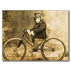Vintage Chimpanzee in a suit and hat riding a bicycle #chimpanzee #chimp #vintage #bicycle #monkey #primate #rustic #antique #photo #ape #vintage #animal #vintage #chimp #funny #cute #chimp #cute #monkey #rustic #monkey #bike #vintage #monkey #vintage #chimpanzee #chimp #on #a #bicycle #monkey #riding #a #bicycle #anytownart #old #circus #cute