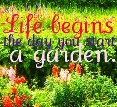 This is actually a picture of my own garden, with a Chinese proverb that I love. ;-) - Brianna.