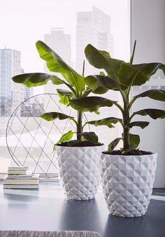 Tropical Planter Geometric Pot Indoor Decorative Planter Trio Plant ...