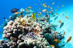 Snorkel at Le Vele Resort, Grace Bay Beach - Turks and Caicos Islands Matanzas Cuba, Varadero Cuba, Cuba Beaches, Beaches Turks And Caicos, Grace Bay Beach, Reserva Natural, Sharm El Sheikh, Snorkelling, Beautiful Sunrise