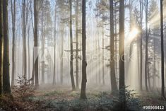 Sun Rays Through The Foggy Forrest Wall Mural - Summer and Spring Forest - Trees Forest Mural, Forest Theme, Foggy Forest, Photo Statue, Photo Elephant, Photo Rose, Forest Wallpaper, Wall Art, Pictures