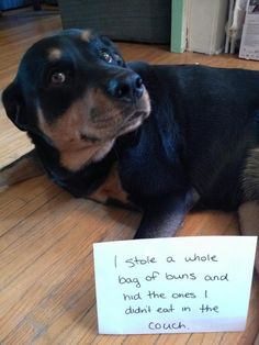 And they won't share their snacks with you. | 31 Reasons Rottweilers Are The Absolute Worst