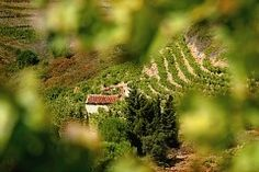 The Vineyard South of France