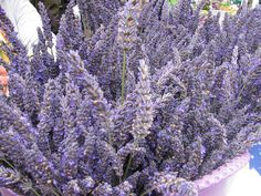 lavender bouquet Lavender Bouquet, Lavander, Lavender Fields, Lavender Flowers, Simple Weddings, Lavender Weddings, Small Gardens, Chicano, Dream Wedding