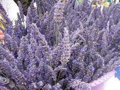 lavender bouquet Lavender Bouquet, Lavander, Lavender Fields, Lavender Flowers, Simple Weddings, Lavender Weddings, Small Gardens, Dream Wedding, Wedding Dreams