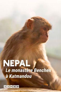 A Katmandou, le monastère Benchen regroupe à la fois un lieu de prière, une école pour jeunes moines, une guesthouse et une clinique. Séjour en immersion. #carnetdevoyage #voyage #nepal #benchen Voyage Nepal, Guesthouse, Bon Plan Voyage, Clinique, Blog Voyage, Movie Posters, Travel, Viajes, Film Poster