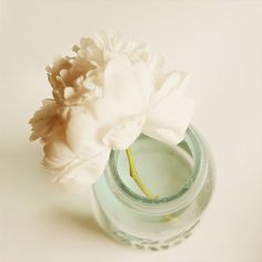 Flower Photo of Ivory Peony in Blue Jar