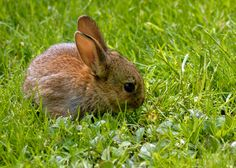 how to keep rabbits out of garden rabbit control stop rabbits3