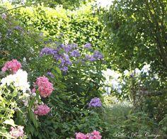 Bella's Rose Cottage: July in the Garden...