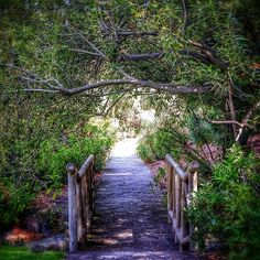 Bridge to light