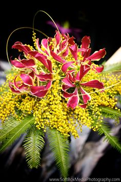 Acacia (mimosa), umbrella fern, flexigrass and gloriosa make a gorgeously dainty bouquet - Bergerons Flowers 🌸 🌹 ᘡℓvᘠ □☆□ ❉ღ happily // ✧彡●⊱❊⊰✦❁❀‿ ❀ ·✳︎· FR APR 14 2017 ✨ ✤ॐ ✧⚜✧ ❦♥⭐ ♢∘❃ ♦♡❊ нανє α ηι¢є ∂αу ❊ღ༺✿༻✨♥♫ ~*~ ♆❤ ☾♪♕✫❁✦⊱❊⊰●彡✦❁↠ ஜℓvஜ 🌹. Tropical Wedding Bouquets, Flower Bouquet Wedding, Rose Bouquet, Floral Bouquets, Floral Wedding, Mimosas, Dark Flowers, Types Of Flowers, Gloriosa Lily