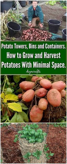 Potato Towers, Bins and Containers. How to Grow and Harvest Potatoes With Minimal Space. When do you get started on your vegetable garden each spring? I used to wait until it was time to plant, but we have a short growing season where I live. That means I don't get nearly the yield that I'm hoping for. #garde #springvegetablegardening