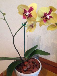 Trabajando en la colección orquídeas: plenitud, de nuestro concepto natura: jardines con intención. Monica Koppel, GC Feng Shui. Pronto a la venta en nuestra tienda!!! Zamora 132, col. Condesa, Mex DF tel 52560199 www.fengshui-monicakoppel.com.mx #conceptonatura #equilibrio #armonia #fengshui #decoraconintencion #jardinesconintencion #colores #asociaciones #significados #simbolos