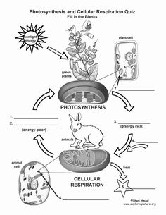 Photosynthesis and Respiration Worksheet Fresh Synthesis and Cellular Respiration Worksheet 1 Biology Lessons, Ap Biology, Science Biology, Teaching Biology, Science Lessons, Science Education, Life Science, Physical Science, Earth Science